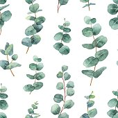 Watercolor vector seamless pattern with silver dollar eucalyptus leaves and branches. Background for textile, paper and other print and web projects.