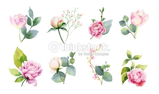 Watercolor vector set of bouquets of green branches and flowersset of bouquets of green branches and flowers. : stock vector