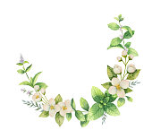 Watercolor vector wreath of flowers and branches Jasmine isolated on a white background. Floral illustration for design greeting cards, wedding invitations, natural cosmetics, packaging and tea.