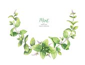 Watercolor vector wreath of mint branches isolated on white background. Floral illustration for design greeting cards, wedding invitations, natural cosmetics, packaging and tea.