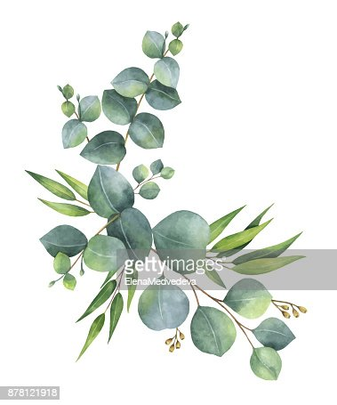 Watercolor vector wreath with green eucalyptus leaves and branches. : Vector Art