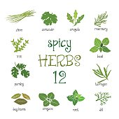 Green web icon set of different spicy herbs