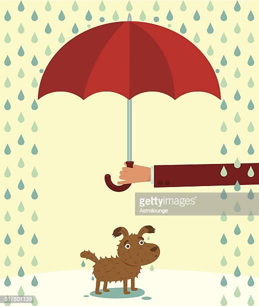Perro con fregadero bajo la lluvia.