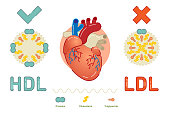 What is Lipoprotein - illustrated explanation