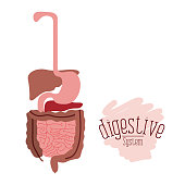 white background with colorful human digestive system vector illustration