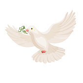White dove with grass in beak vector flying bird isolated on light background. Pigeon with plant flying with wide open wings and carrying food