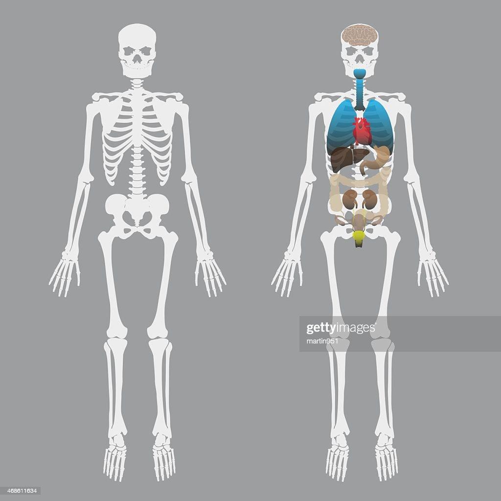 Y Bones Diagram - All Kind Of Wiring Diagrams •