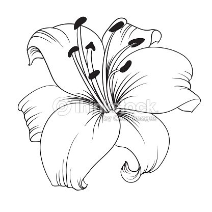 White Lily Vector Art | Thinkstock
