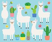 Cute plain white llamas or alpacas and cacti vector illustration set.