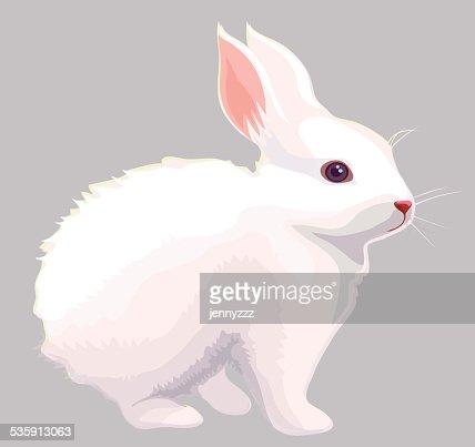 White rabbit : Vector Art
