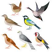 Wild Birds of Europe - Wren, Goose, Woodlark, Tit, Nightingale, Harrier, Goldfinch