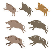 Wild boar wild pig, animal illustrations on white background