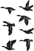 Flock of ducks silhouette in different variation