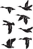 Flock of ducks silhouette in different variation