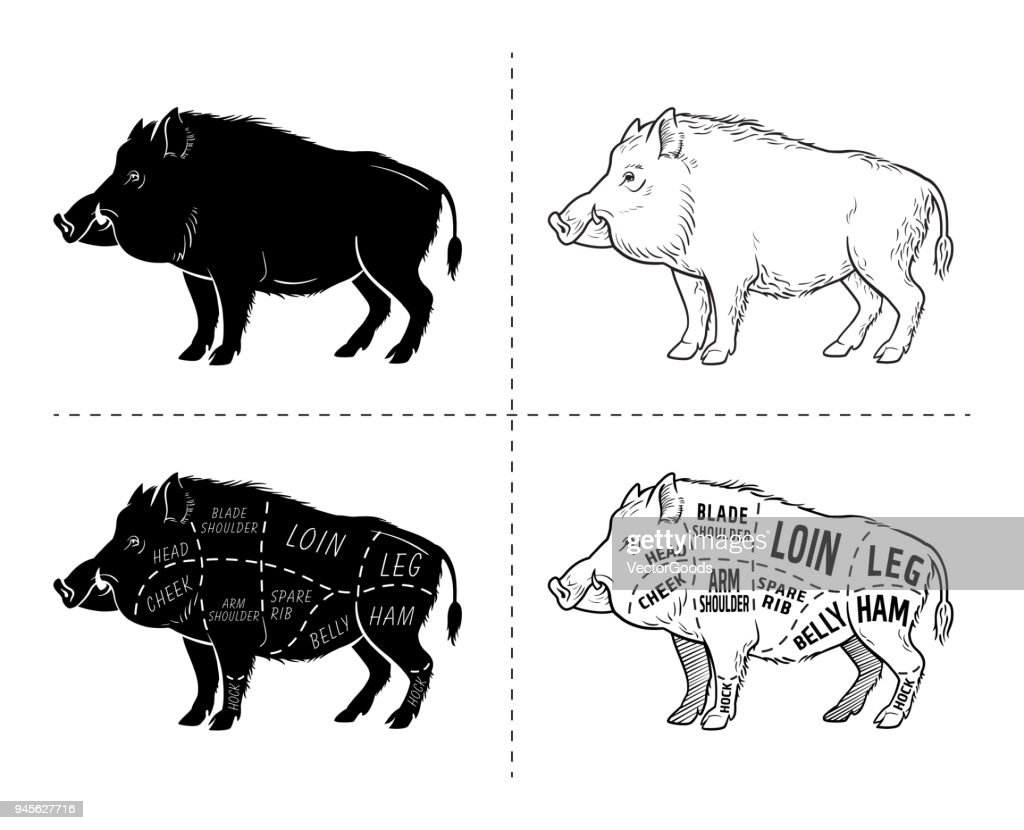 Diagram Of A Wild Pig - Auto Wiring Diagram Today •