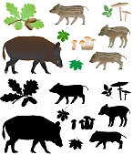Wild pig with cubs in color images and silhouettes