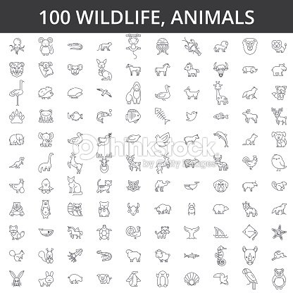Wildlife african, sea, domestic, forest, zoo animals, cat, dog, wolf, fox, tiger, fish, bear, horse, dino, rhino, monkey line icons, signs. Illustration vector concept. Editable strokes : stock vector