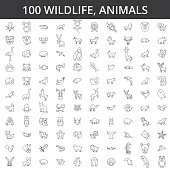 Wildlife african, sea, domestic, forest, zoo animals, cat, dog, wolf, fox, tiger, fish bear horse dino rhino monkey line icons signs Illustration vector concept Editable strokes
