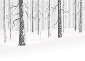 Vector winter forest with snow. Trees with bark. Gray and white colors. Abstract background.