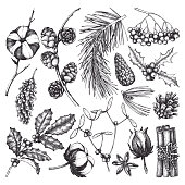 Vector collection of hand drawn christmas decor elements. Vintage winter plants sketch: conifers, holly berries, mistletoe, cones, cotton, mountain ash. Outlines set.