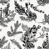 Winter seamless pattern with bouquets of evergreen plants and cones. Hand drawn botanical illustration. Christmas decoration.