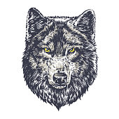 Wolf dark on white background vector hand draw illustration. T-shirt illustration. Poster illustration. Sticker illustration.