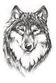 Портрет волка шариковой ручкой