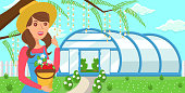 Woman with Crop Strawberries on Greenhouse Background. Harvesting in Greenhouse Concept. Natural Resource. Growing Plants. Crop Delivery. Fruit Picking Work. Farm Business. Vector Flat Illustration.