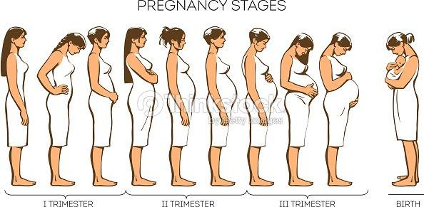 Perkembangan Bayi Dari 1 hingga 40 Minggu Kehamilan