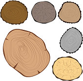 Wood slice texture tree circle cut raw material vector set. Detail plant years history textured rough forest. Circular growth industry environment illustration.