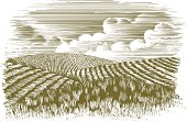 Woodcut-style illustration of rolling hills of fields.