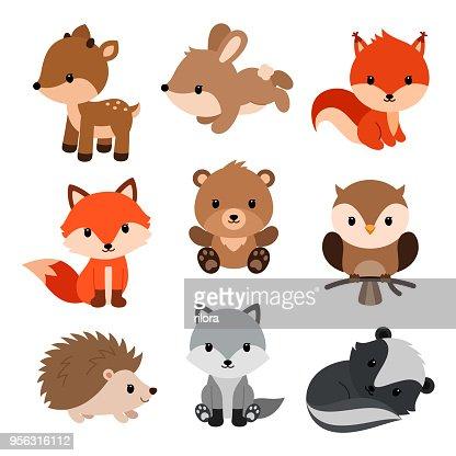 Woodland animals set. : Vector Art