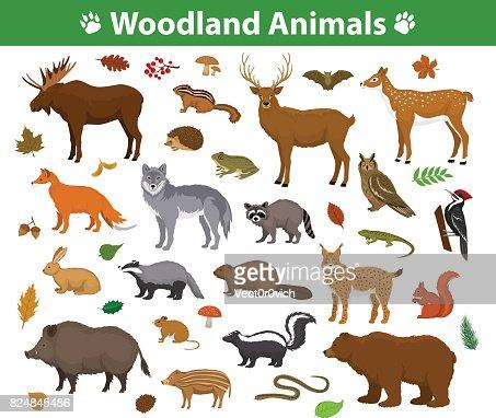 Woodland forest animals  collection including deer, bear, owl, wild boar, lynx, squirrel, woodpecker, badger, beaver, skunk, hedgehog : stock vector