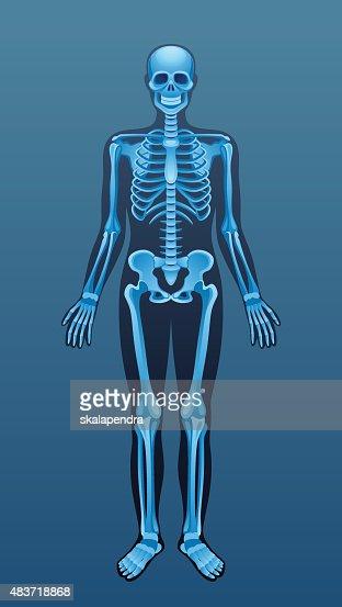 xray human skeleton vector art | thinkstock, Skeleton