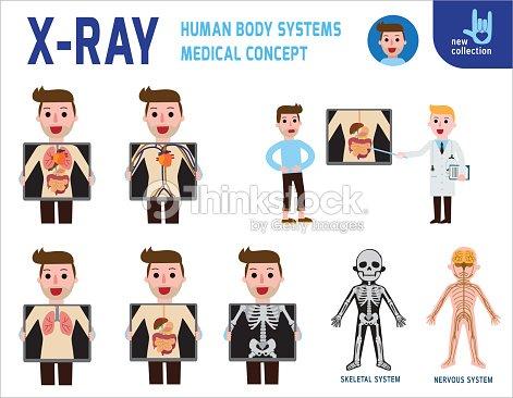 Röntgenbildschirm Innere Organe Und Skelett Systeme Des Menschlichen ...