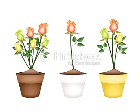 Yellow Orange And Green Roses In Ceramic Flower Pots Vector Art
