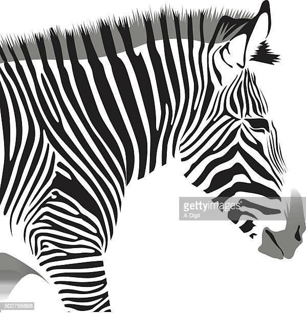 Zebra's Head