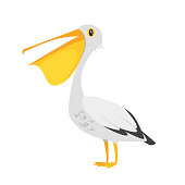Vector cartoon style illustration of zoo animal - pelican. Isolated on white background.