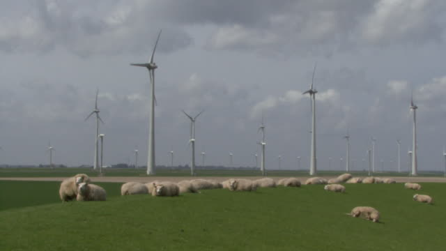 WS OF WIND TURBINES AND SHEEP