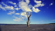 DEAD TREE AND CLOUDS  MAR CHIQUITA  ARGENTINA