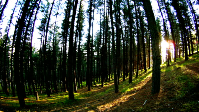 TIMELAPSE OF FOREST IN ESQUEL ARGENTINA