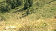 VIEW OF HILL SLOPE