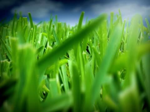 GRASS - FLY THROUGH
