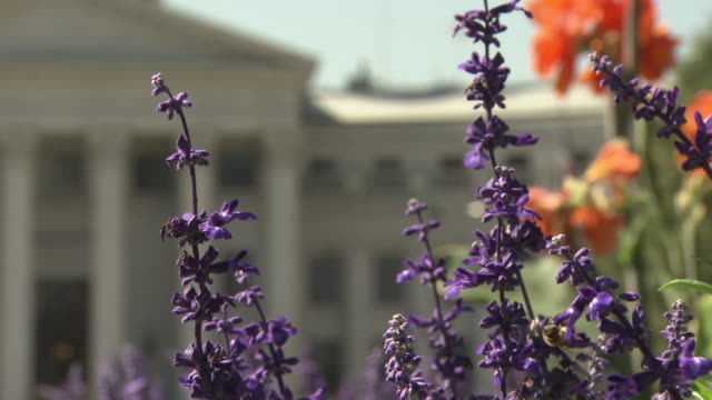MEDIUM ANGLE OF DENVER CAPITOL BUILDING, GOVERNMENT BUILDINGS. FLOWERS.