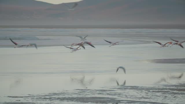 FLAMINGOS FLYING OVER LAGUNA COLORADA, BOLIVIAN ALTIPLANO