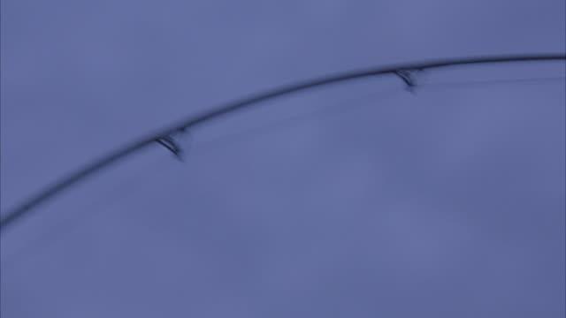 MEDIUM ANGLE OF FISHING POLE WAVING IN MIDAIR. STRUGGLING AGAINST SOMETHING PULLING ON FISHING LINE.