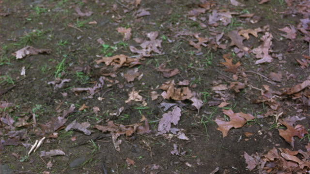 CLOSE ANGLE OF DRIED BROWN AND ORANGE LEAVES ON DIRT GROUND. SEE SOME SPRIGS OF GRASS PEEPING THROUGH PACKED GROUND DIRT.