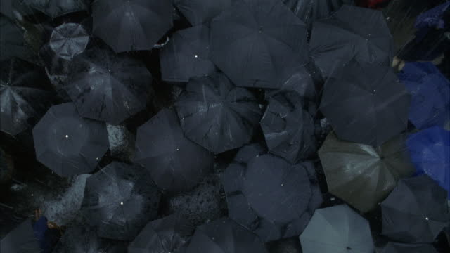 HIGH ANGLE STRAIGHT DOWN ON GROUP OF OPEN BLACK AND BLUE UMBRELLAS IN RAIN. CANNOT SEE ANY PEOPLE UNDER UMBRELLAS.