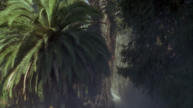MEDIUM ANGLE OF PALM TREE AND WATERFALL. PANS RIGHT TO TREES. PANS LEFT AND ZOOMS IN ON PALM TREE FRONDS. CONTINUES TO PAN LEFT TO SEE OTHER SURROUNDING TREES.