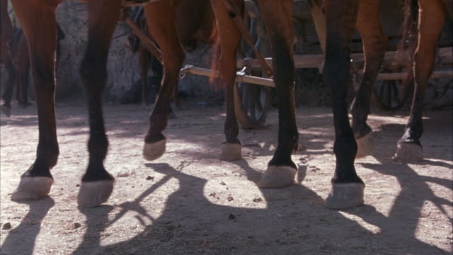 CLOSE ANGLE OF TWO DARK BROWN HORSES' LEGS. HORSES BEGIN PULLING A CARRIAGE OR CART WITH WHEELS ON DIRT ROAD. COULD BE HORSE DRAWN CARRIAGE. SEE STRAPS AND CHAINS THAT CONNECT THE HORSES TO THE CARRIAGE.